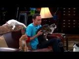 Шелдон и Лапусик :3 | ТБВ - Nyan Cat