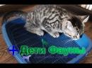 Как приучить котенка к туалету / лотку. Советы ветеринара