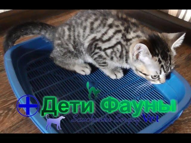 Как приучить котенка к туалету лотку Советы ветеринара