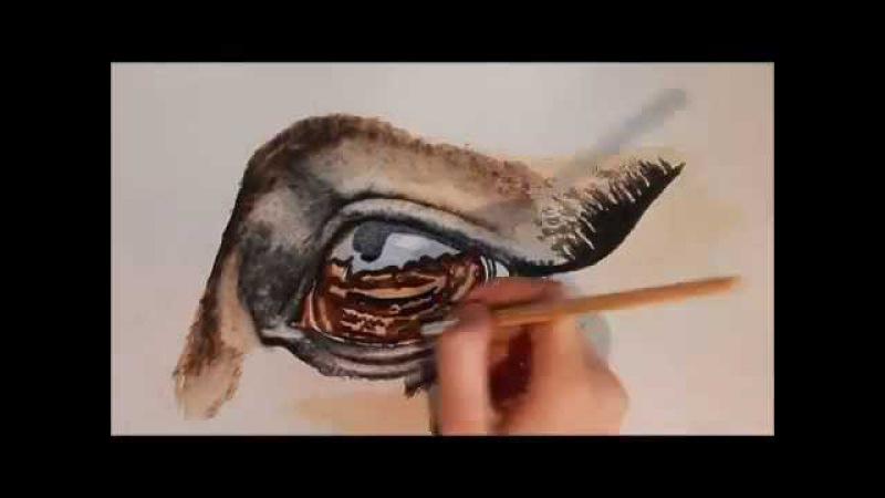 Aquarellstudie mit Graphitskizze des Exterieurs eines Rappen