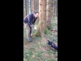 Рабочие собаки тренировка нюха ягдтерьера ч.2