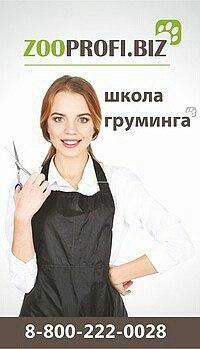 Афиша 16 апреля 2019. Обучение стрижке собак.Челябинск
