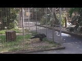 Хитрый орёл в клетке и цапля