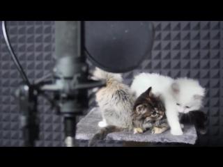 Котики поют.. Прикол!!!