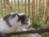 Кот говорит не знаю