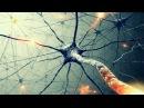 Тайны сознания. Бог в нейронах - Теория Всего от Athene