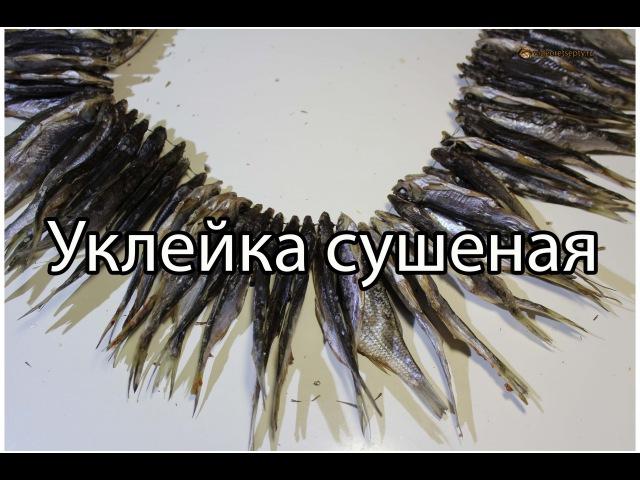 Уклейка сушеная Как сушить рыбу Вяленая рыба Dried fish Видео Рецепт