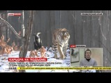 Козла Тимура из приморского сафари-парка готовы приютить во фракции ЛДПР