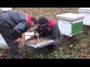 Дым пушка Результат обработки пчел варомором дым пушкой The smoke gun The result of processing by