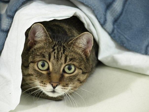 Была одна отдушина, и ту забирают. Немецким домашним котам хотят запретить плотно общаться с дамами во время уличных прогулок.