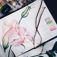 Ирина Сарт   Ботаническая иллюстрация