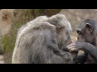 Животные похожи на нас. Фильм 8. Эмоции и чувства
