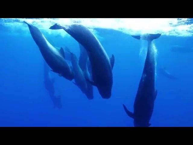 Dolphin Embassy. Мой Пилот, Кит My Pilot, Whale (RUS)