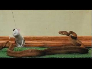 Чудаки: Укус змеи за член