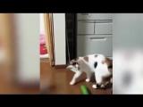 коты против огурца(очень смешно - смотреть всем)
