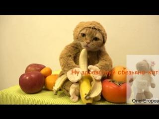 Обезьяно-котовое поздравление от меня)))