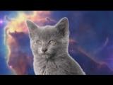 поющие коты ! супер прикол!!!_HD