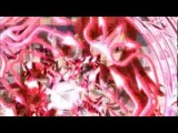 [AMV Fairy Tail] Erza Scarlet / Mirajane Srauss ~Monster~