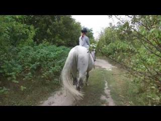 Прогулка на лошади породы Орловский рысак