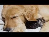 Дружная семейка.  Необычная дружба животных.