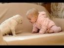 Кошки и собаки смотрят на малышей первый раз