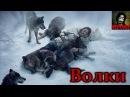 История о том, как волки спасли человека! Трогательная история до слез!