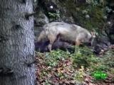 BBC. Мир природы. Трансильвания. Опасные соседи