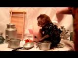 Чучундра и Кабан сняли клип на песню Ларисы Брохман