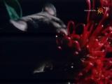 Наедине с природой (2004)  Поссумы - рассказы о неожиданном