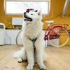 DOG CULTURE | Культура общения людей и собак