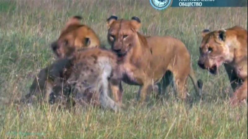 BBC Жизнь на планете Земля Млекопитающие Документальный животные 2009