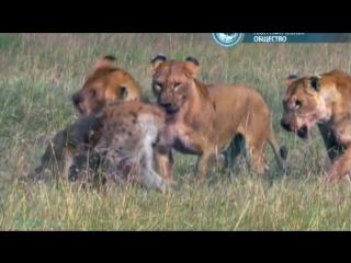 BBC «Жизнь на планете Земля: Млекопитающие» (Документальный, животные, 2009)