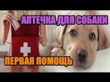 Аптечка для собаки: что в нее входит