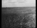 Holodomor-1_(by_fazza)