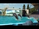 Дельфинарий в Архипо-Осиповке 1
