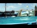 Дельфинарий в Архипо-Осиповке 2