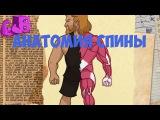 Анатомия Спины - ТОП 5 упражнений на спину