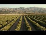 Avicii ft Aloe Blacc - Wake Me Up (clean edit version)