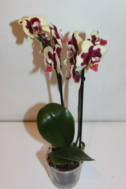 Приглашаю Вас в свою группу с цветами: http://vk.com/orchid_spb