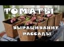 Выращивание рассады томатов (помидоров)
