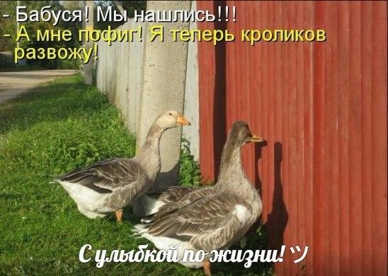 https://pp.vk.me/c630930/v630930346/2009b/BT57RbEP1LE.jpg