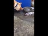 Собака пытается спасти жизнь рыбы
