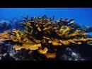 Diving Looe Key Reef Big Pine Key Florida Keys