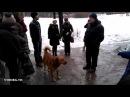 Обсуждение собак в парке Монрепо