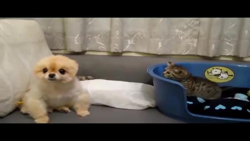 Смешные, милые, симпатичные котята и щенки-[save4.net]