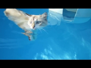 Плавающий кот