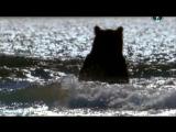 BBC «Жизнь на планете Земля: Хищники и их жертвы» (Документальный, животные, 2009)