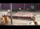 Puppies kennel Iz Knyaginino on walk 14 09 2016