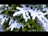 Зима. Заснеженные Ели. Зимние Елки в Снегу. Футажи для видеомонтажа