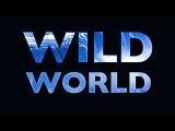 Мир дикой природы: 6 серия (Остров Сапело)